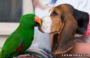 Если бы я мог разговаривать с животными