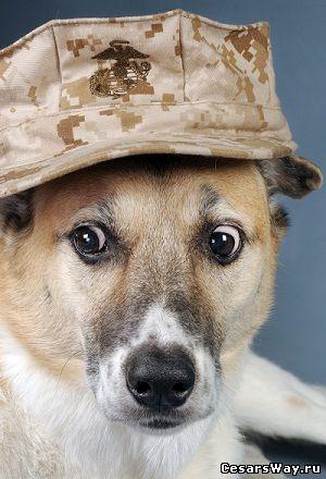 стрессовое растройство у собак