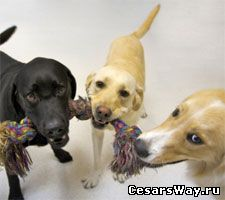 игры детей с собаками